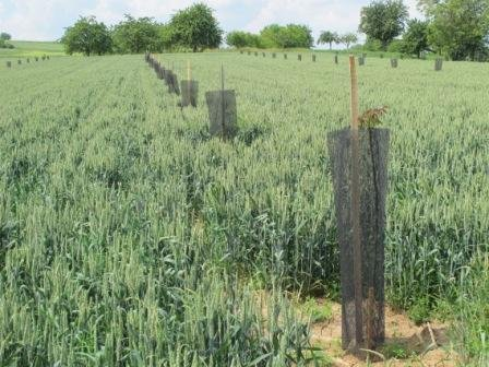 Forestiers d'Alsace - agroforesterie